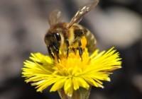 Bite ziedā